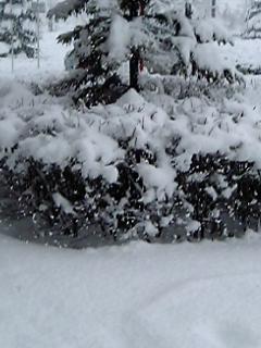 [モブログ]<br />  早春の大雪